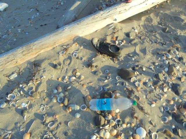 穴あき貝の海岸