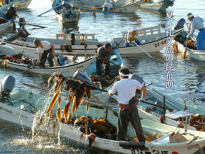 礼文島の昆布漁